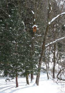 日光の森の巣箱